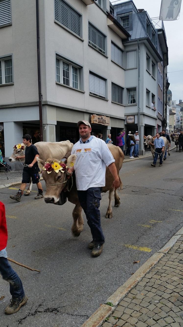 Viehumzug 1